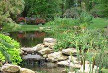 Water Features / Water provides the tranquility you need from the stressful environment in which we live. Waterscapes adds a special allure to any property.