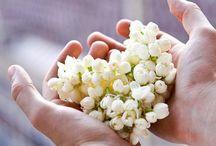 ❤️~~Jasmin~~❤️ / ❤️La flor del aroma del amor❤️ / by Min Vill-Her