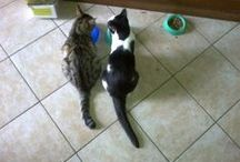 Meow's world