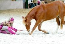 Paardenshow - Show équestre 2013