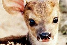 A W W W / cute animals / nature / love