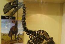 BIRDS ext. - Dyatrima gigantea,  Edward Drinker Cope in 1876 / Diatryma (il cui nome significa: attraverso un'apertura) è un genere di uccelli preistorici carnivori alti circa 2 m, diffuso nell'Eocene, 50-65 milioni di anni fa, in Europa e Nordamerica. In modo particolare esso viveva sulle distese pianeggianti e dal momento in cui non esisteva nessun altro grande predatore, non aveva in pratica rivali e si nutriva prevalentemente di piccoli mammiferi.