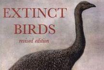 BIRDS ext. - Moa - Dinornis novaezelandiae, (Owen 1843) / I Dinornitidi erano giganteschi uccelli inadatti al volo vissuti in Nuova Zelanda a partire dal Tardo Cretacico. Il loro nome comune, moa, deriva dall'omonima parola maori usata per indicarli.  Caso unico fra gli uccelli (anche fra gli altri ratiti), i Dinornitidi non possedevano ali, nemmeno abbozzate. Erano davvero enormi: la specie più grande, il moa gigante settentrionale della Nuova Zelanda (Dinornis novaezelandiae), raggiungeva i 3,6 m d'altezza ed il peso di oltre due quintali e mezzo.