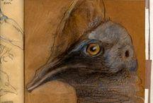 BIRDS - Casuarius casuarius (Linnaeus 1751) / Questo uccello è diffuso in Nuova Guinea, esclusa la parte centrale a settentrione e le montagne, nell'Isola di Aru, nel Queensland nord-orientale (Australia) e nell'isola di Seram, dove fu probabilmente introdotto. •Casuarius casuarius (LINNAEUS, 1758) - casuario comune o australiano •Casuarius bennetti GOULD, 1857 - casuario di Bennett o casuario nano •Casuarius unappendiculatus BLYTH, 1860 - casuario settentrionale