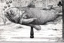 Coelacanthus - Latimeria chalumnae Smith, 1939 / Ordine Coelacanthiformes Famiglia Latimeriidae Genere Latimeria