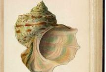PAINT - Shells