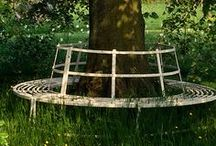 GARDEN - Benches around tree