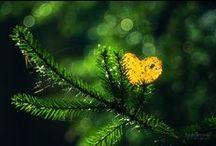 Landscapes-Nature