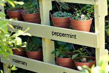 Garden / Planting, soil, design etc.
