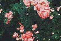 ▪ la vie en rose ▪ / ▪ pick a flower on Earth and you move the farthest star ▪