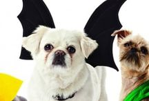 Best pet costumes / Do you like dressing your dog up on Holidays? Here are funny ideas you could use on your furry friend.