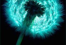flowers plants FIBONACCI