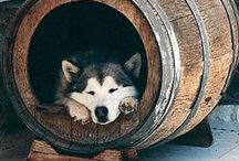 Wine Related DIYs / Bottles, corks, barrels, crates, and more.