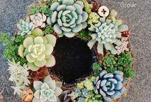 succulent & cactus / 今までに作った多肉植物の寄せ植え http://taniku-grow.com/ 福井の多肉Garden*Grow
