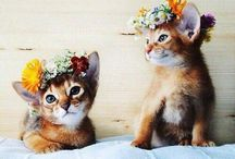 Cute / All the adorable pics of pets and animals.