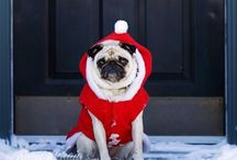 Festive Pets / Ok, so I love Christmas and I love pets, so this board is a mixture of costumes, presents and DIY ideas.
