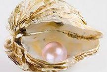 Kagylók / Shells