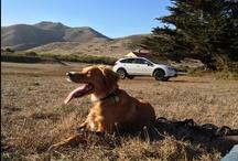 Subaru Loves Dogs / Subaru is a big fan of your furry friend.