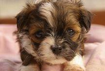 Hundebabies / Aktuelle Bilder der süßesten Welpen aus der Hundezucht aus alten Jagdhaus nahe der Mecklenburgischen Schweiz