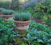 Edible Landscaping / Foodscaping/edible landscaping. Sustainable living and beautiful landscaping don't have to mean 2 different things!