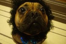 I LOVE French Bulldogs!!!!