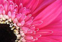 Bloemen- Roze