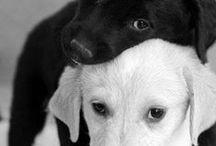 Fotos diseño canino / Diseños