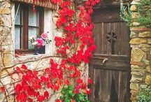 Doors & Windows / by Terry Tinsley