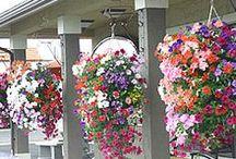 Balcony Gardens / Balcony ideas / by Nancie Richard