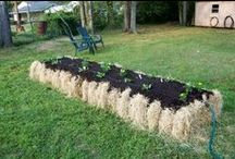 Raised Bed & Container Gardening