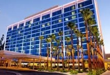 Cheap Hotels Near Disneyland / Sitting at your comfy homes or offices, you can find and book best-rated hotels close to Disneyland with popular places located nearby at price-compare deals with us.