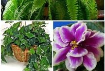 Plants Can Improve Air Quality / These plants will help improve your indoor air quality