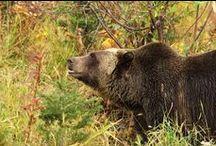 Wildlife & Nature / Flora, fauna, mountains, rivers, lakes + volcanoes
