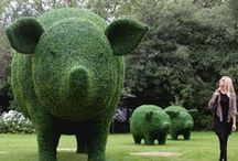Tons of Topiary / All shapes and sizes...