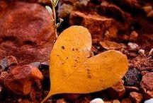 Hart in natuur
