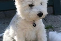 Canine Love!