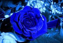 Bal de fleurs et de couleurs