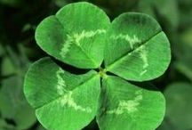 St. Patrick's Day / March 17----when everyone is Irish / by parkridgemom