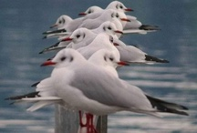 tones: sailaway blues / the indigos and whites of summer sailing ... yachts, seagulls, ocean, shells / by Karen Meadows