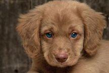 Pretty puppies / by K☼K☼