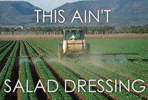 GMO - Genetically Modified Organism