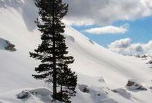 Reisen in den Winter. ⛷️ ❄️⛄ Abenteuer im Schnee / Schnee ist einfach wunderbar, so weiß und so rein. Die Natur kommt zur Ruhe, die Geräusche werden gedämpft, Spuren am Morgen verraten, wer in der Nacht unterwegs war. Wenn ich die unberührten Schneeflächen sehe, möchte ich selber Spuren hinterlassen, die Erste sein auf der Piste. Schnee weckt bei mir so viele schöne Erinnerungen und ich freue mich jedes Jahr neue zu sammeln beim #Schneeschuhwandern #Schlittenfahren #Snowboardfahren #Skifahren #Langlaufen und vielem mehr.