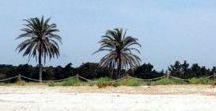 Inselhopping in Spanien. / Von Ibiza nach Formentera, von Mallorca nach Menorca. Es gibt so viele spanische Inseln und keine ist wie die andere. Du findest Party und Natur, weiße und schwarze Strände. Landschaften, die zum Wandern einladen, breite Strände, Dünen. Es gibt so verdammt viel zu entdecken und ich bin immer wieder begeistert, dass diese kleinen Paradiese gar nicht so weit weg sind! #Ibiza #Formentera #Mallorca #Menorca #LaGomera #Palma #GranCanaria #Fuerteventura #Lanzarote