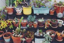 Plants / by Cajsa Mikkelsen