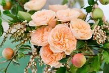 WT // Peach Wedding / by Design Therapy