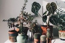 Pretty Plants / Lots of visual inspiration for plants at home as well as tips for how to care for them.