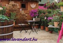 LavandArt Kertészet-Gardening