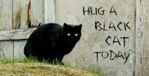 Black Cats / People owned by a black cat are lucky people, indeed.