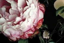 garden :) / by Emily Sage