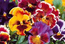 giardino multicolor